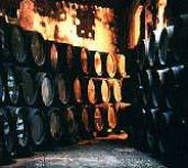 Sherry barrels in a bodega's cellar.